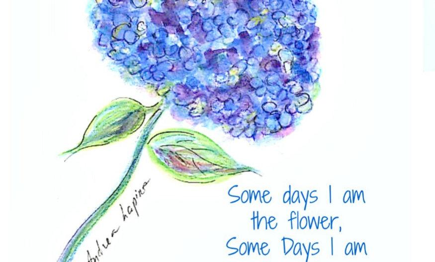Hydrangea, Blue  Flowers, Purple Flowers