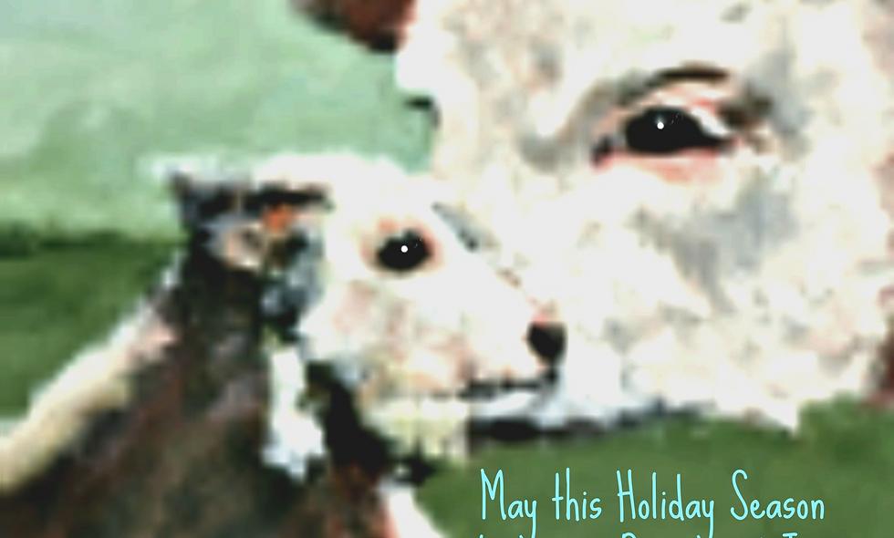 Christmas, Holiday Card, Cow Christmas  Card