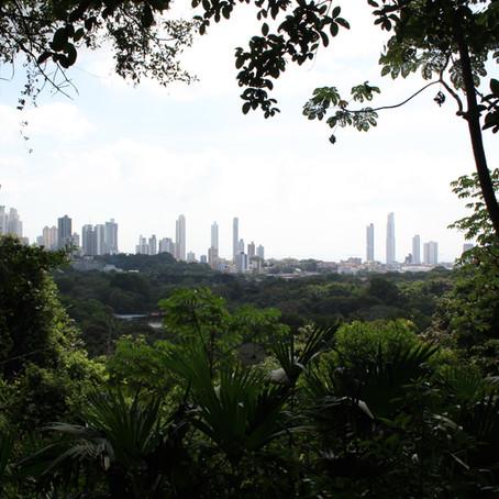 Panama City-Schillernde Schmetterlinge im Bauch