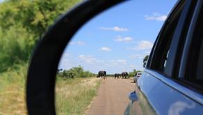 Kruger-Nationalpark & Blyde River Canyon - Impressionen, für die man keine Worte findet