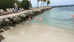 Aruba-Kleine Insel, ganz groß