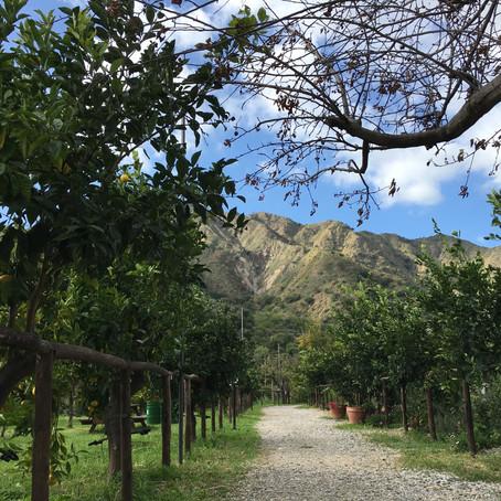 Puro entusiasmo: Siziliens gelbleuchtende Zitronenseite