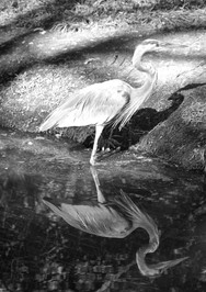 Reflection of the Bird