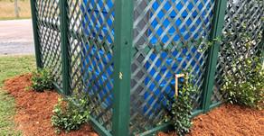 New Carolina Jasmine Plants Installed!