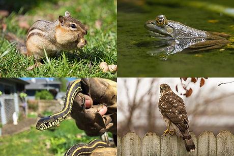 animal family group.jpg