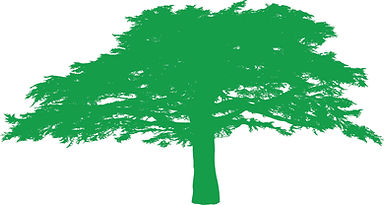 cedar tree lighter green.jpg