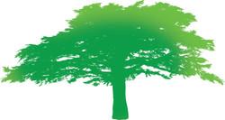CEDAR TREE green