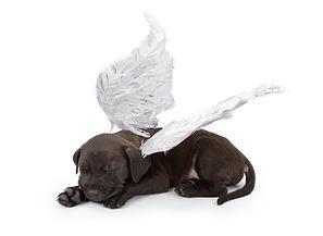 A black Labrador Retriever mix puppy wea