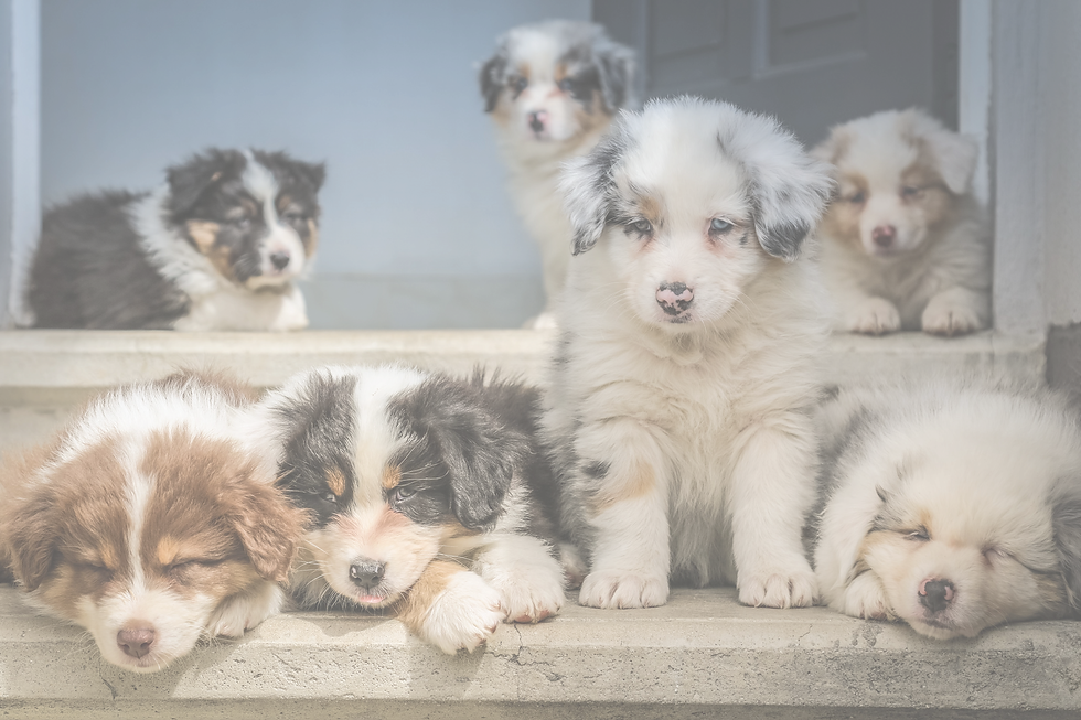 Puppies_edited.png