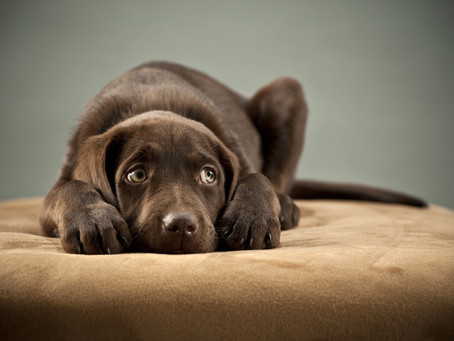 What does your dogs 'guilty' look really mean?