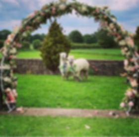 alpaca wedding.jpg