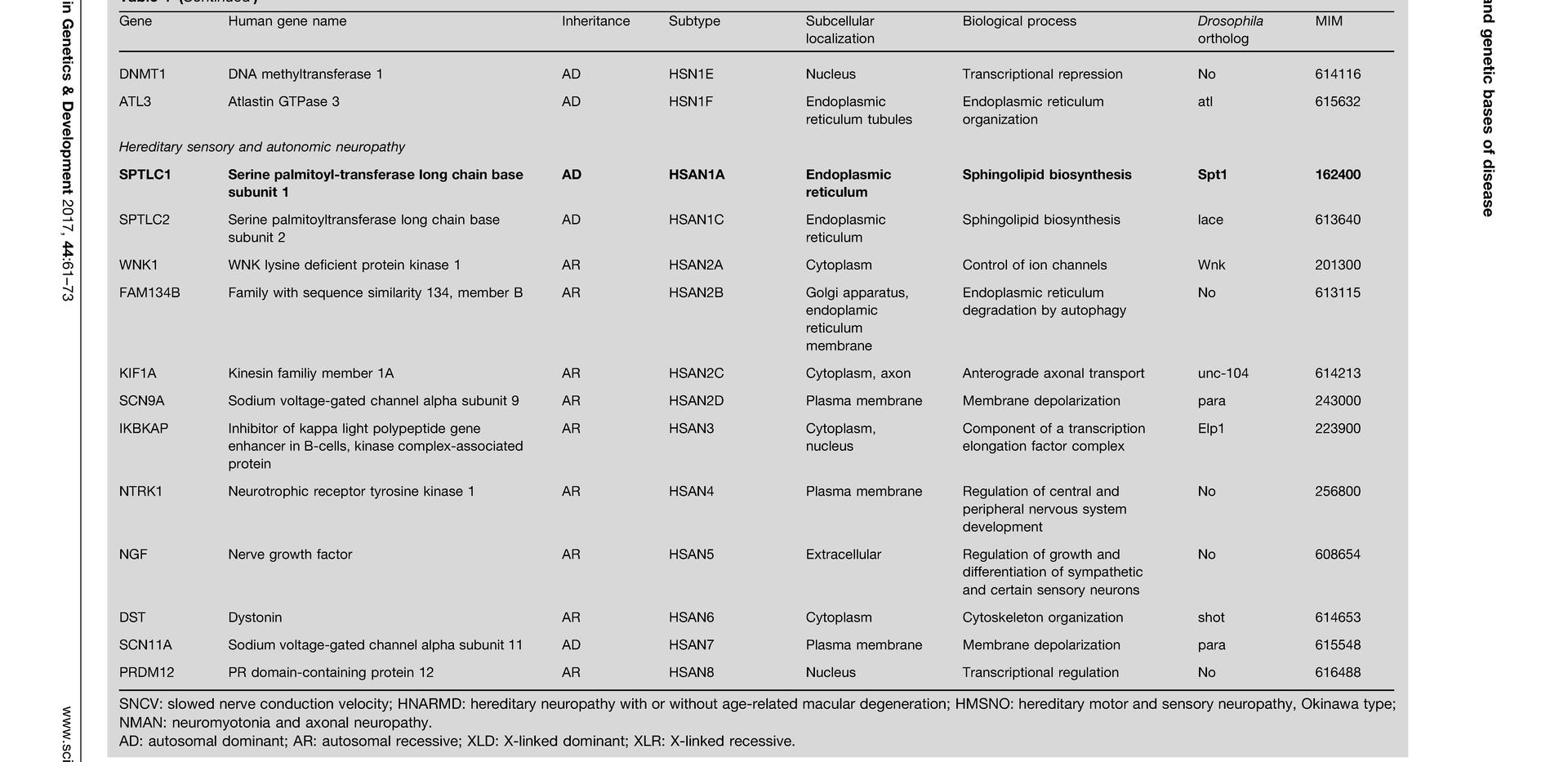 Molecular Pathogenesis of Peripheral Neuropathies