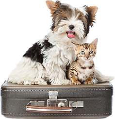 Dog-Cat-Boarding-Suitcase.png