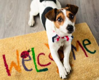 pets-welcome-300x242.jpg