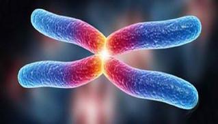 Los telómeros ¿La fuente de la eterna juventud?