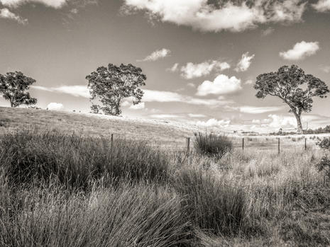 Tree scape 2