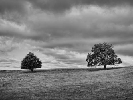 Tree Scape 1