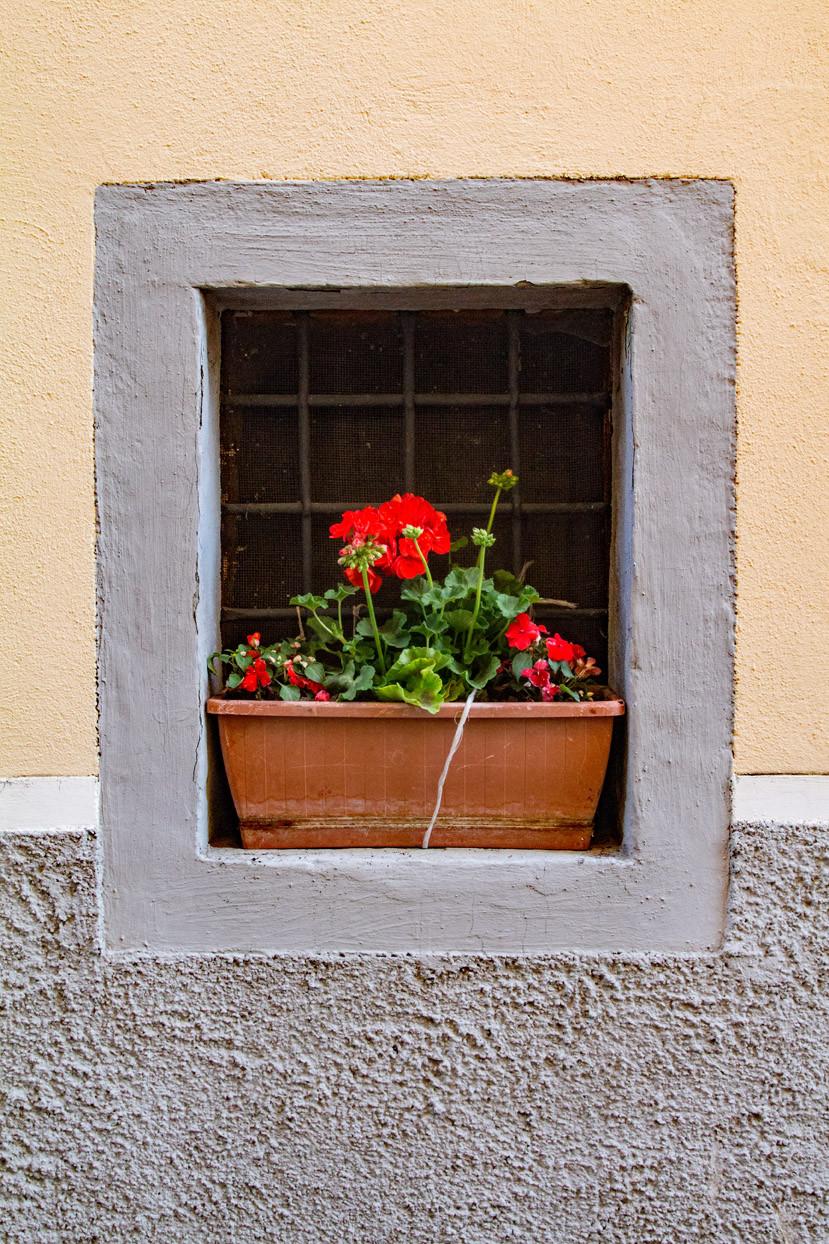 Flowers Agnone Molise