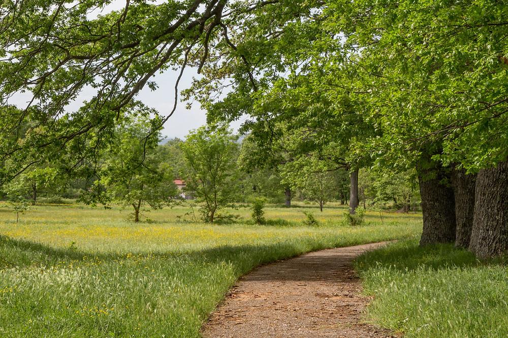 Sepino Altilia Path Molise