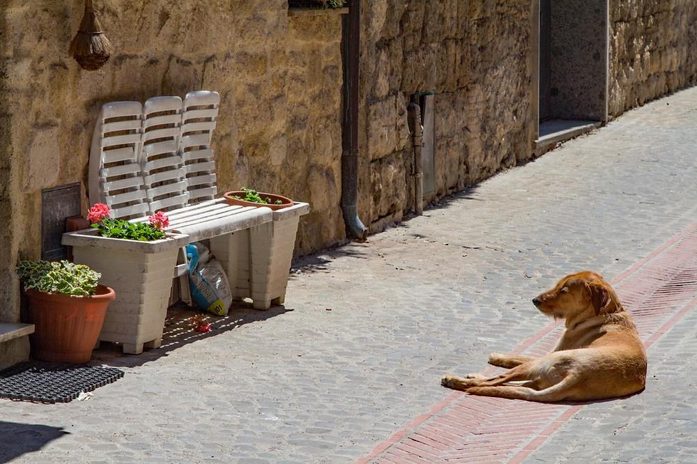Dog street Tarquinia Lazio