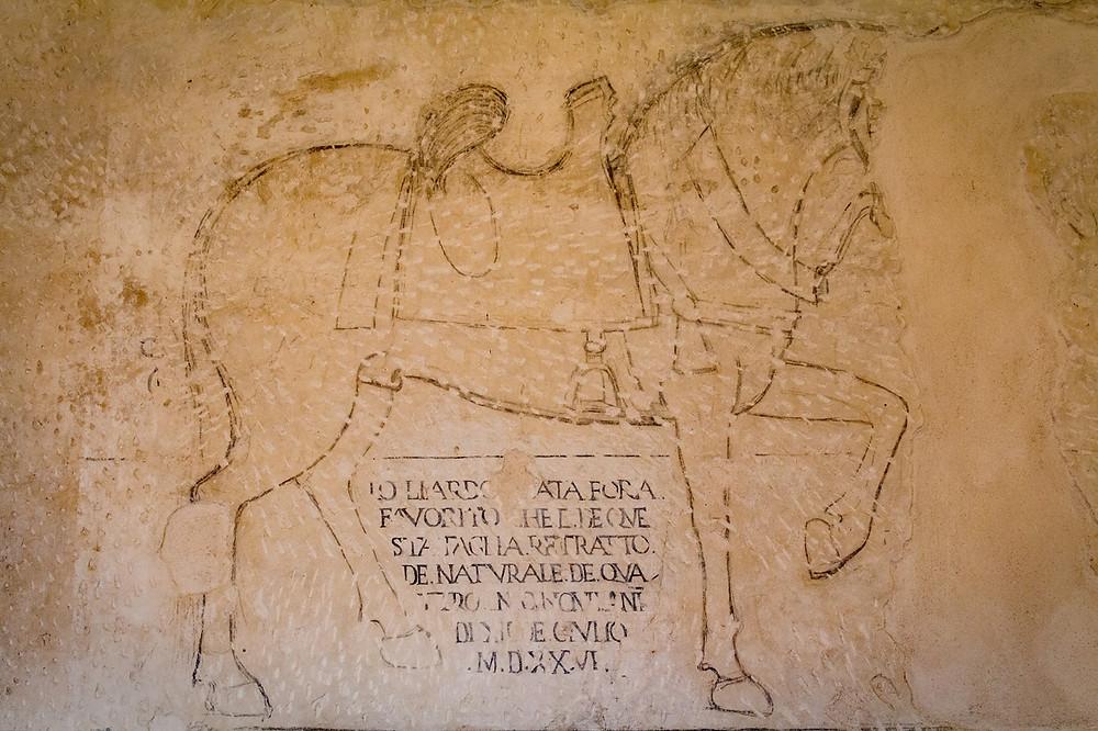 Horse Castello Pandone