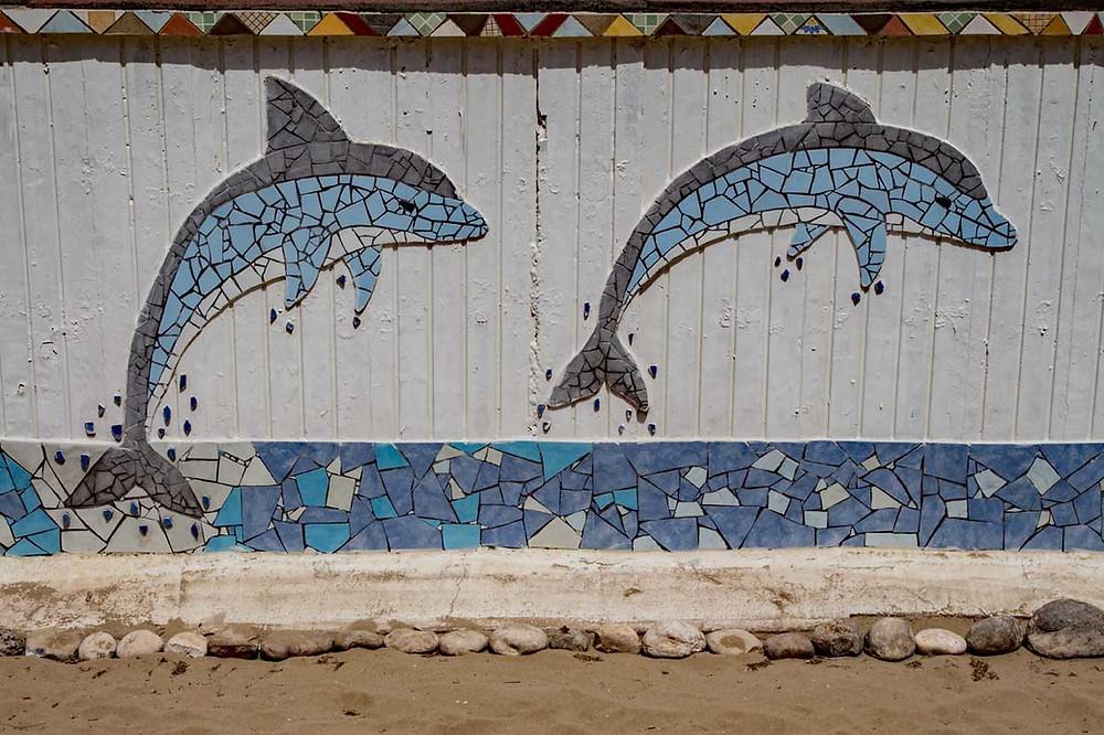 Dolphins Termoli Molise