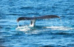 whale-367233_1920.jpg