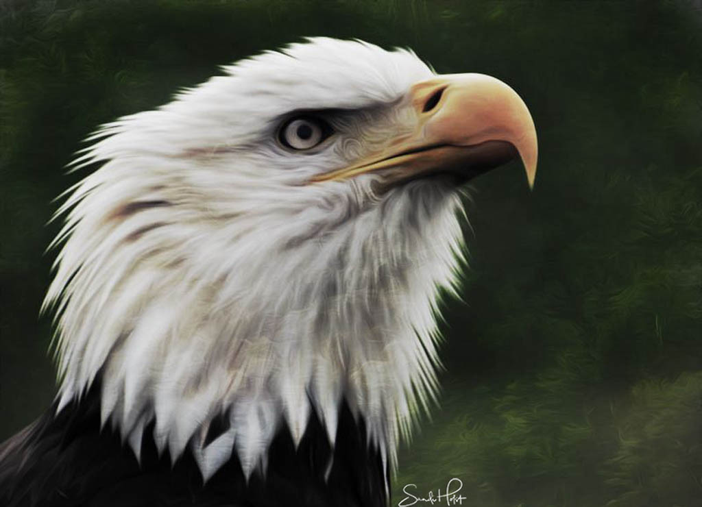 Oil Paint - Eagle 2 (2).jpg