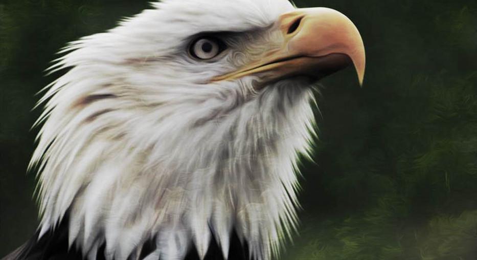 Oil Paint - Eagle 2 (2).jpg