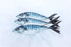 Mackeral print 2 large 2.jpg