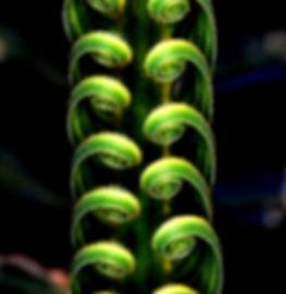 Macro image of fern frond
