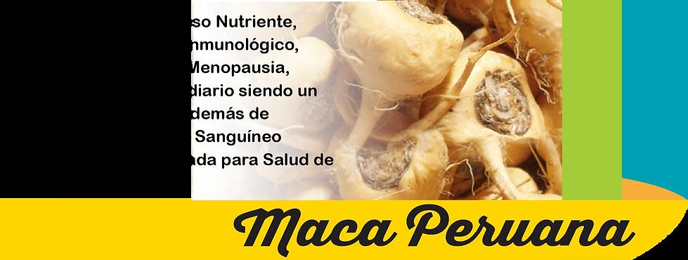 2nda pieza-02.png