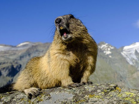 BE GROUNDHOG FIT! 7 Life-changing Lessons from The Beloved Classic!  …and What They Have to Do with