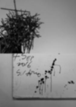スクリーンショット 2020-04-04 10.15.53.png