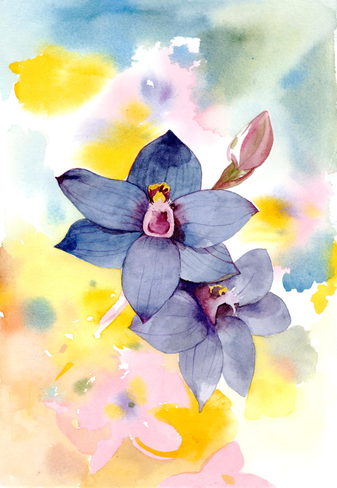 Blue sun orchids
