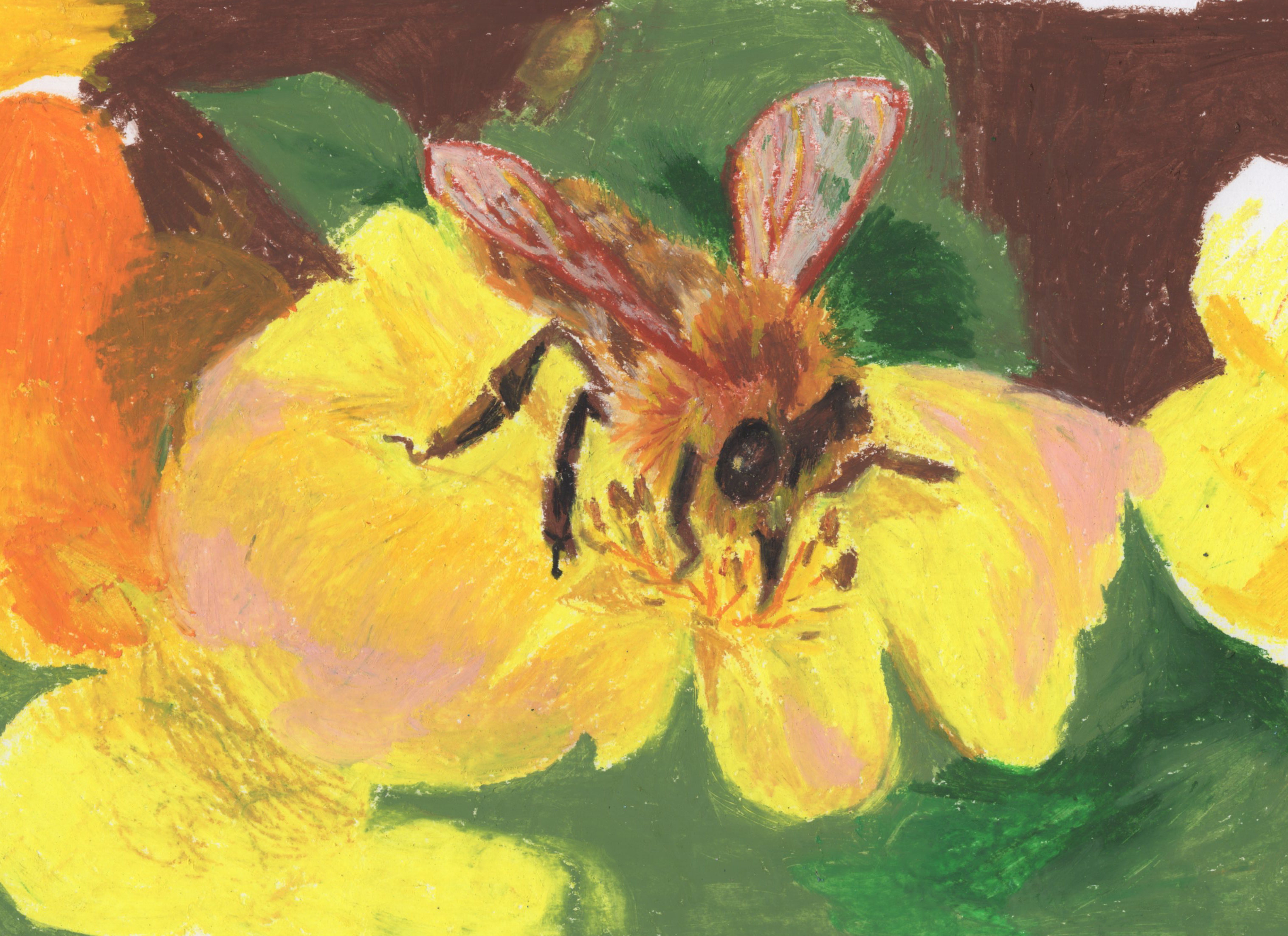 Hylaeus anthracinus; Yellow faced be