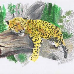 Amur leopard; Panthera pardus orient