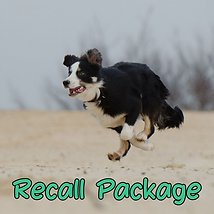 Recall Package.png