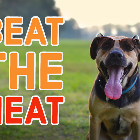 Beat the Heat! Tips for helping your dog in hot weather.