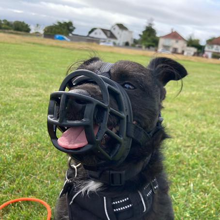 Muzzles - are they really for nasty dogs?
