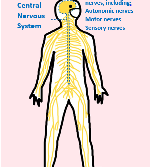 Arm Numbness Medical Care Guide, Diagnosis, and Treatment
