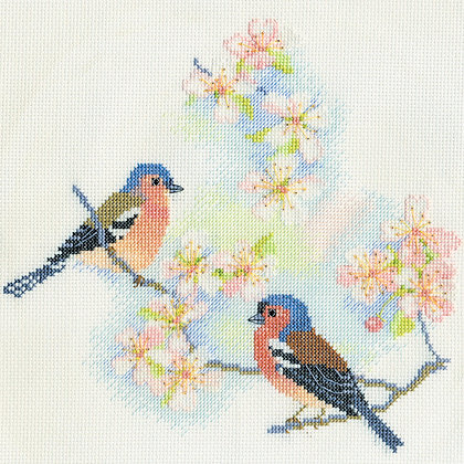 Chaffinches and Blossom