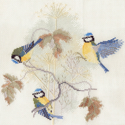 Blue Tits and Seed Heads