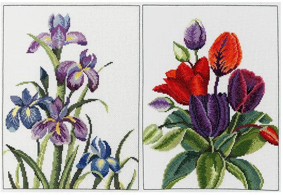 Iris and Tulip Harmony