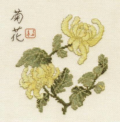 Chrysanthemum: chart only