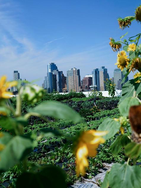Brooklyn Grange Rooftop Farm (NY)