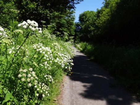 Tarka Trail to Bideford.