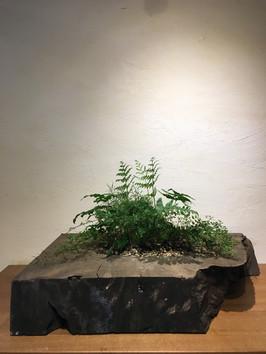 神代杉とシダ植物
