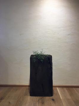 神代杉とワイヤープランツ