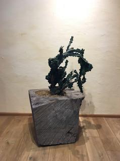 秋田杉とサボテン